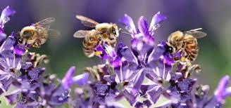 Blumeninseln für Insekten